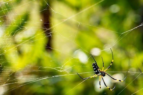 Foto profissional grátis de animal, aracnídeo, aranha, filamento