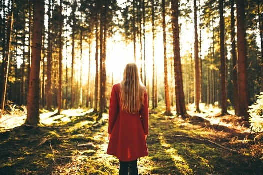 Free stock photo of light, landscape, nature, person