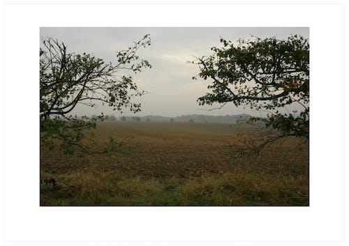 Foto profissional grátis de alimento, área, cerca viva, céu cinza