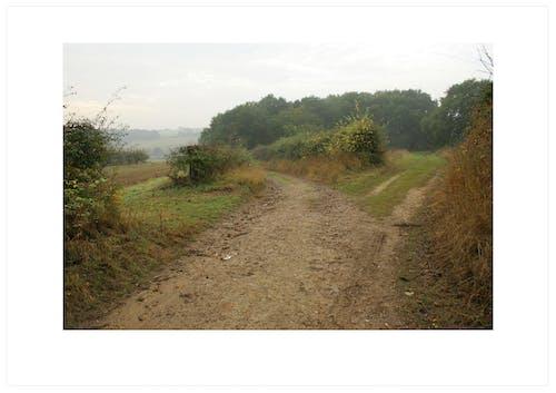 Foto profissional grátis de áreas, caminhos, castanho, ecológico