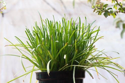 Бесплатное стоковое фото с трава