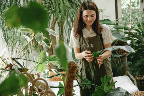 Positive female in apron touching potted plant in greenhouse