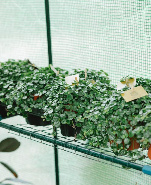 High angle of pots with growing green plants with tags placed on shelf in greenhouse