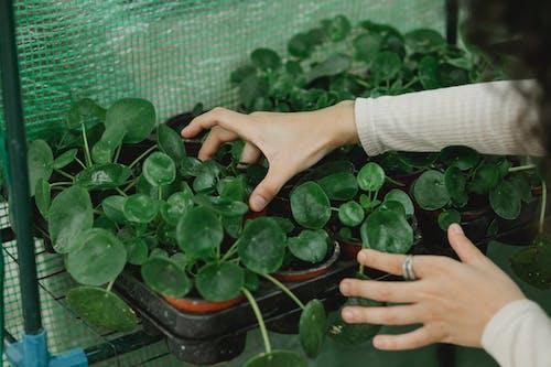 Personne Tenant Une Plante De Feuilles Vertes