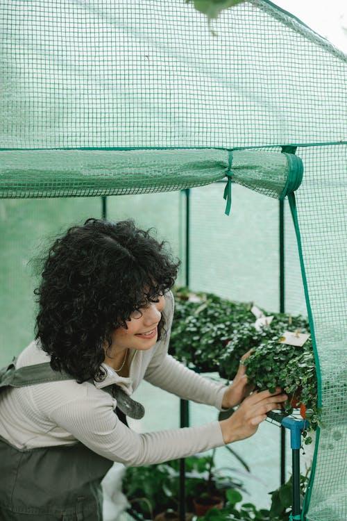 Female gardener planting seedlings in greenhouse