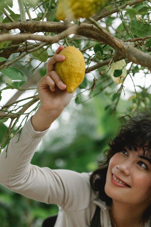 Smiling ethnic woman collecting ripe lemon in garden