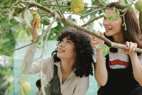 Diverse female gardeners collecting lemons in orchard