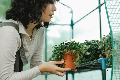 Busy woman with potted plants in glasshouse