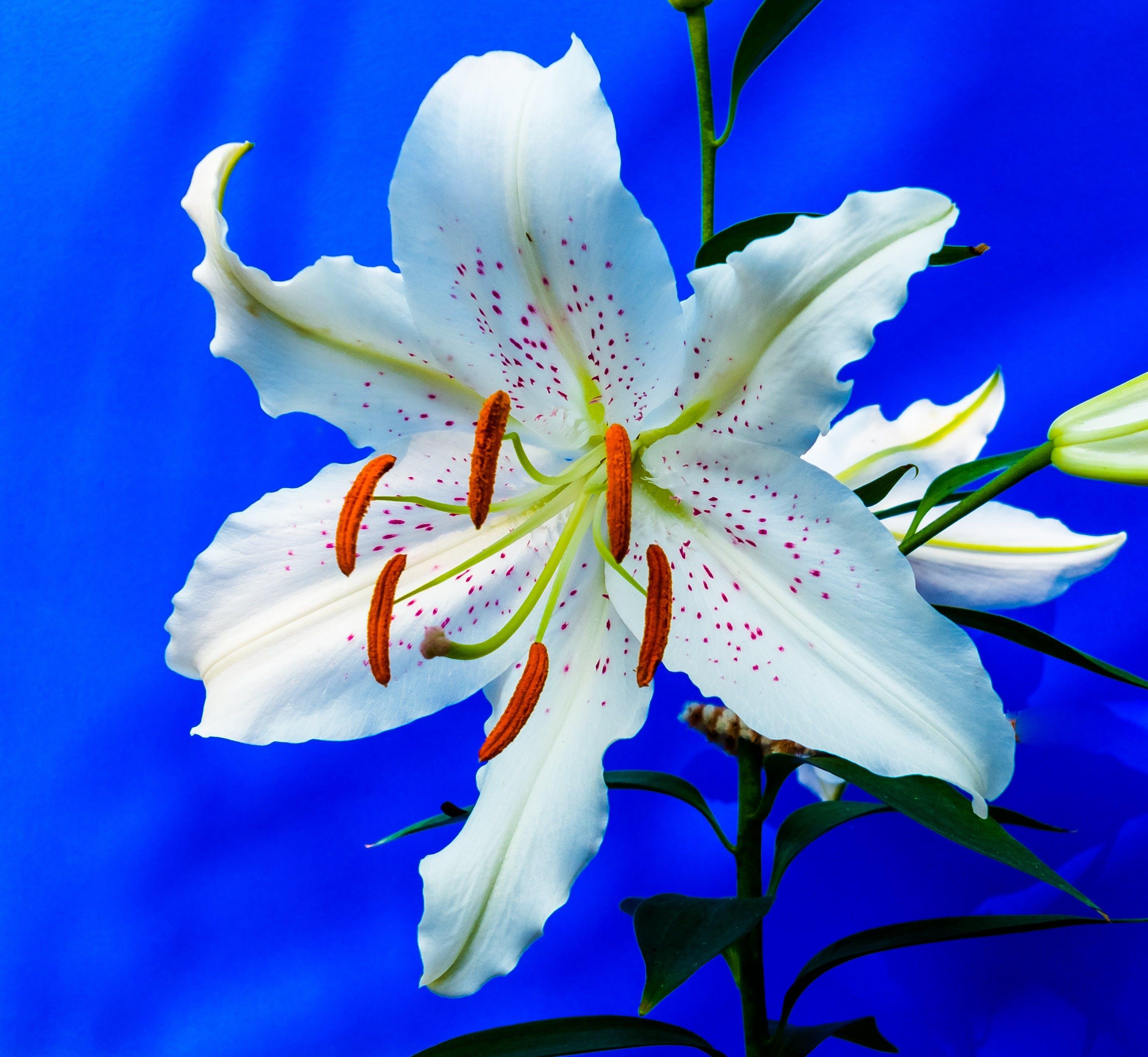 Foto stok gratis berkembang, bunga, flora, mekar