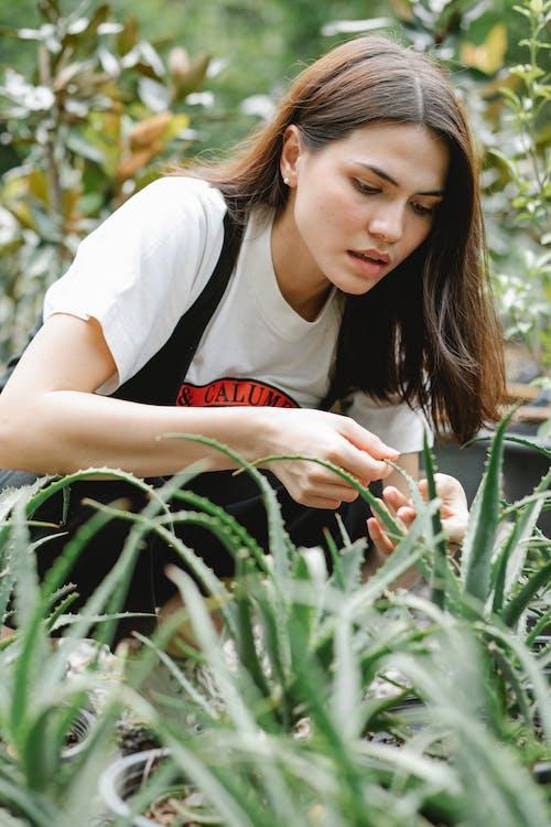 Serious female gardener checking leaves of succulent plant in garden