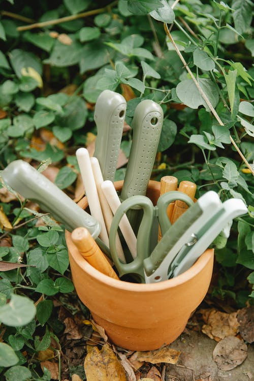 Pot with various tools for gardening