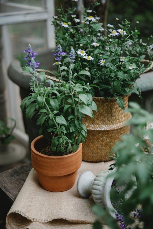 綠色和紫色的花,在棕色煲