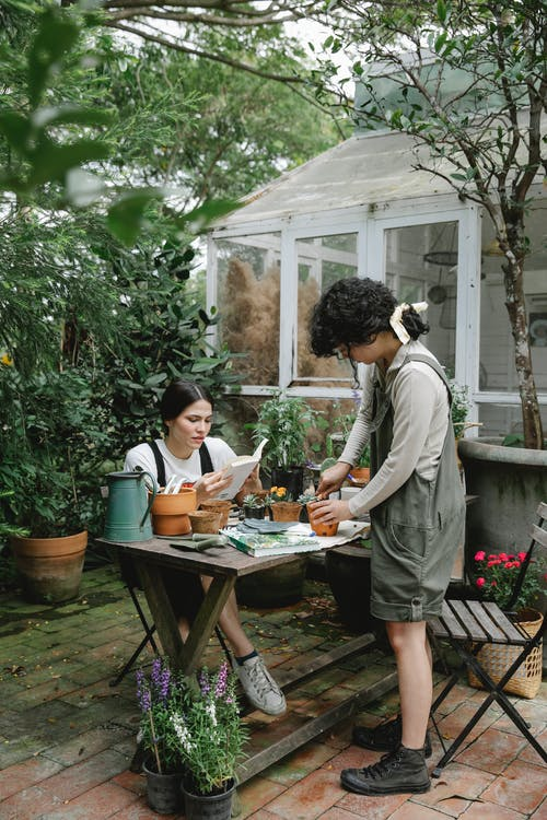 Full body of female workers cultivating sprouts in pots and reading gardening book at wooden table in backyard