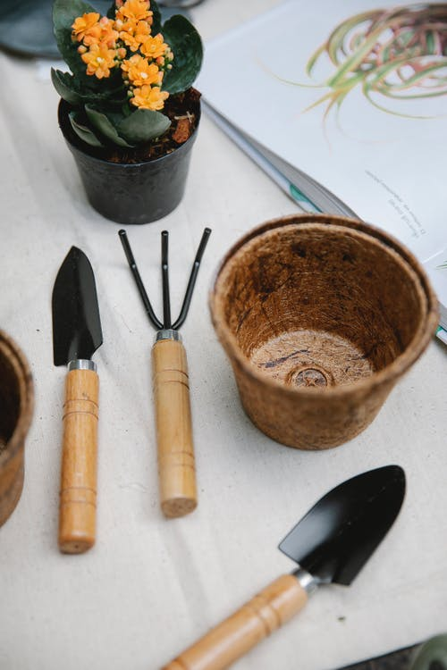 Gardening tools with potted blooming succulent