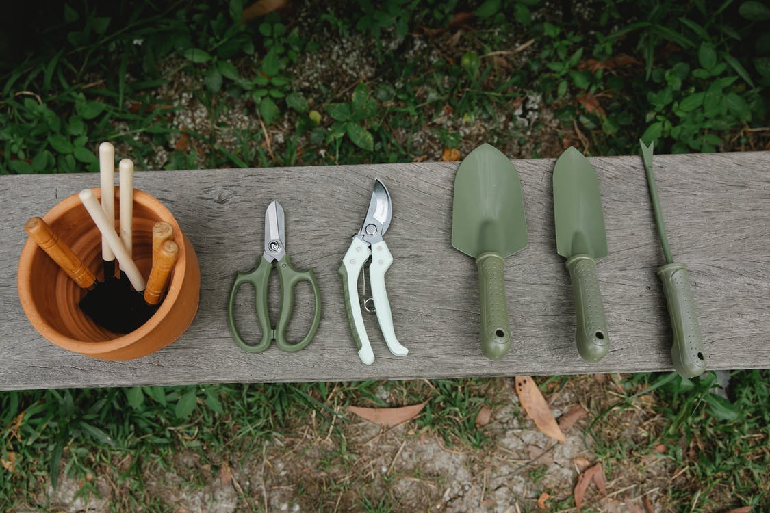 Top view of row of scissors secateurs shovels and tools for loosening soil near pot with instruments on wooden bench in garden