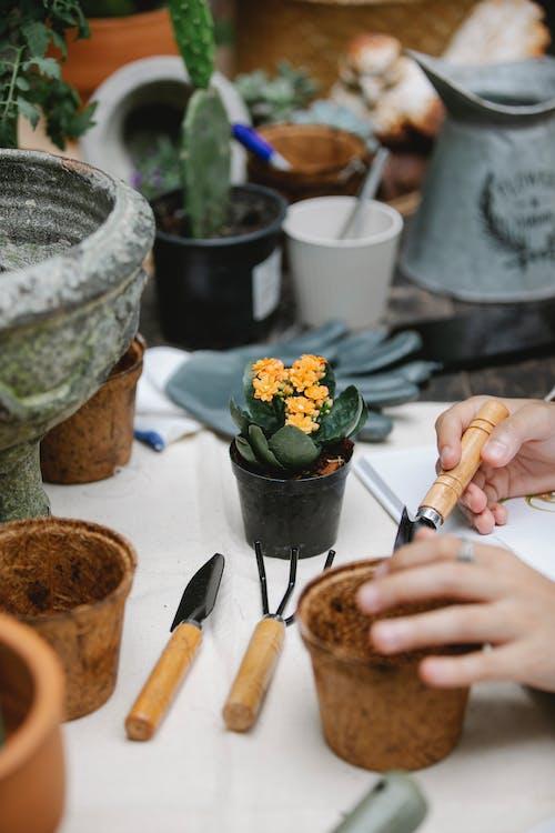 Person preparing soil in peat pot for transplanting flower