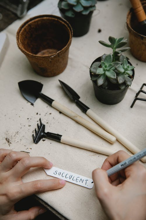 From above of crop anonymous gardener writing succulent on tag for plant at table with gardening equipment