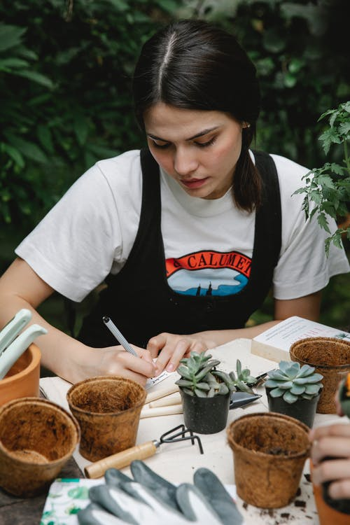 High angle of concentrated female gardener writing on paper while transplanting succulents in orangery