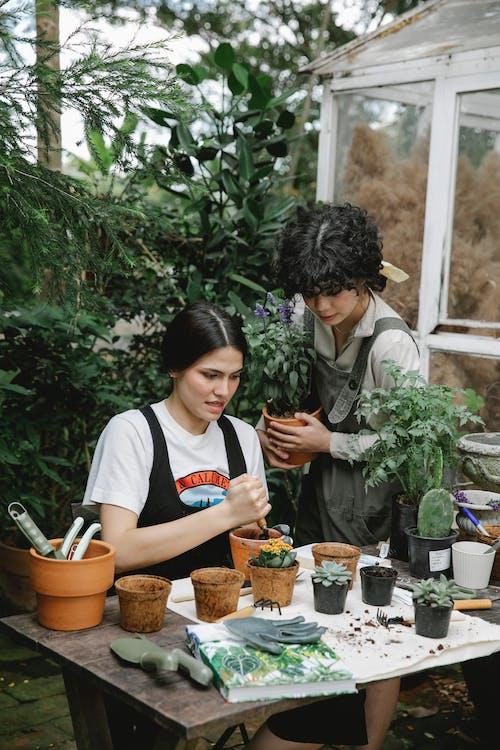Female gardeners planting flowers in orangery
