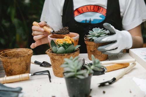 Crop anonymous female gardener with soil on spade planting succulents at table with different instruments