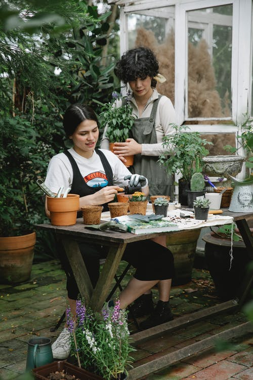 Female gardener with green plant standing with colleague transplanting succulents in peat pots