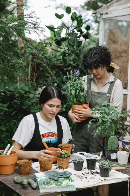 Woman standing with blooming plant near assistant sitting at table and planting seedlings in pots on garden