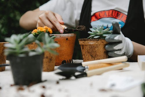 Woman adding soil to succulent in pot