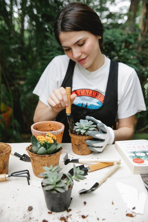 Female worker in glove with gardening instrument planting succulent in peat pot in yard