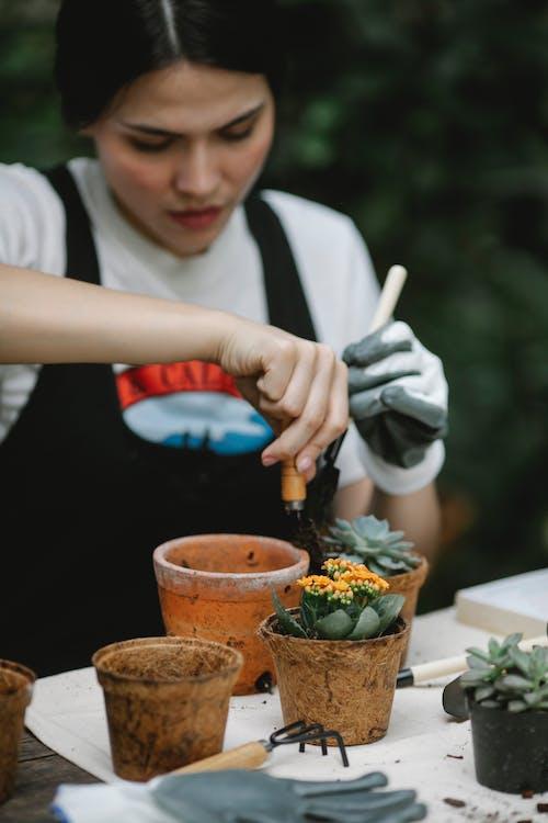 Focused woman transplanting succulent in peat pot