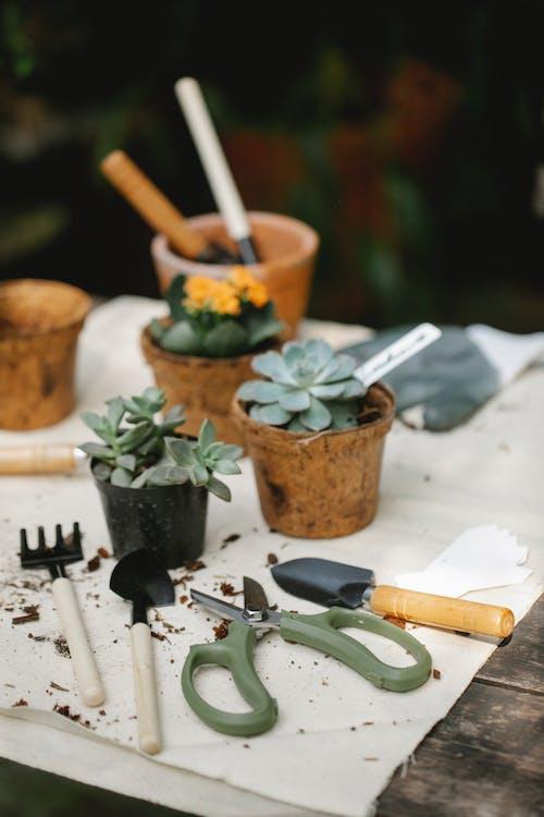 Pianta Succulenta Verde Sulla Pentola Di Terracotta Marrone