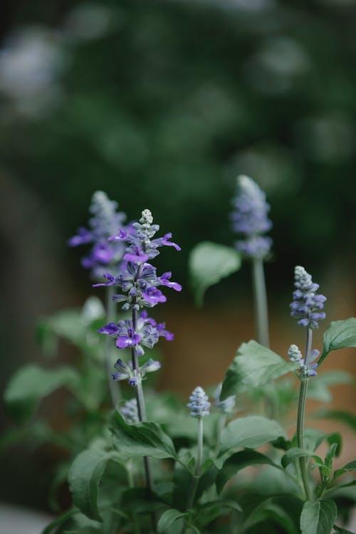 Fiore Viola E Bianco Nella Lente Tilt Shift