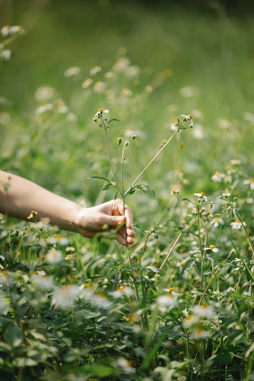 Faceless woman collecting flowers on grassy field