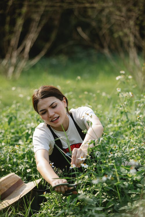 Young female gardener in t shirt and overall near straw hat collecting chamomiles on grassy field in sunny summer day in nature