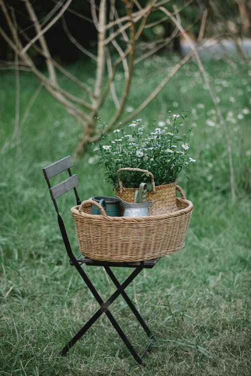 Chair with wicker basket and bouquet of chamomiles near pots in nature on grassy meadow near tree and flowers in summer day