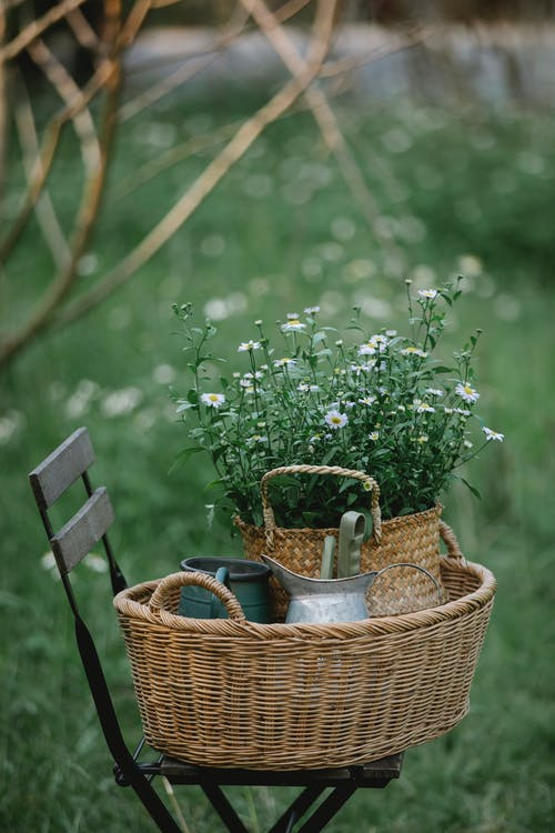 Basket with chamomiles and pots on chair in nature