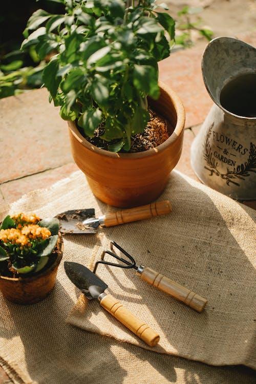 Gratis stockfoto met akkerland, blad, bloem