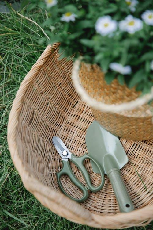 Безкоштовне стокове фото на тему «букет, вегетувати, вертикальний»