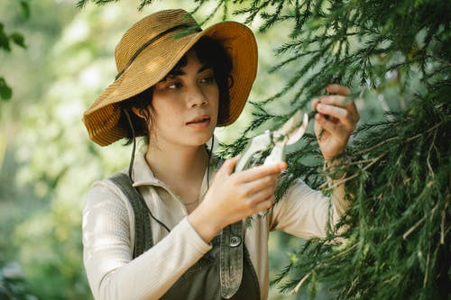 Young ethnic woman cutting fir tree branches