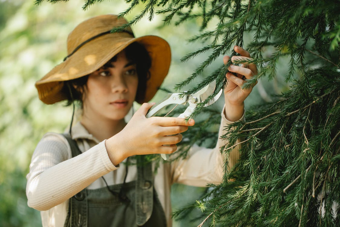Focused ethnic female gardener in hat cutting branches of tree with pruner in hands standing in countryside