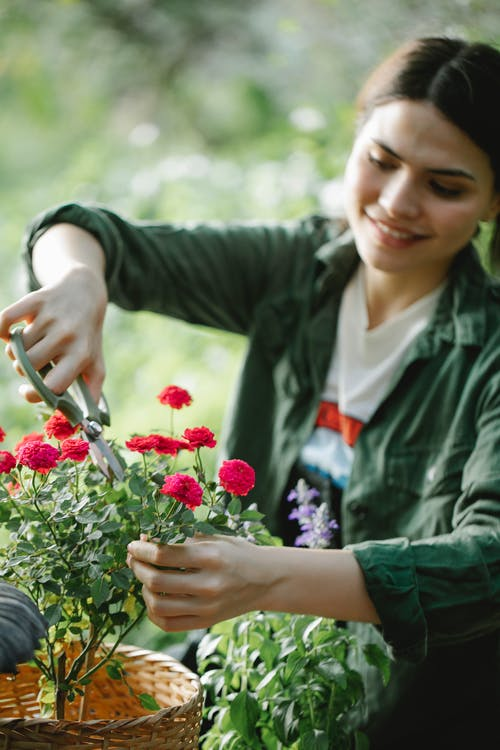 Smiling woman cutting stems of roses