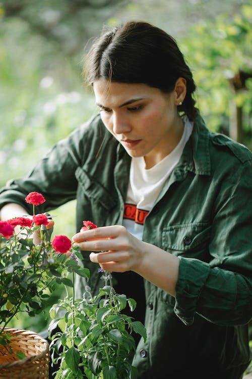 Безкоштовне стокове фото на тему «аромат, ботаніка, вирощувати»