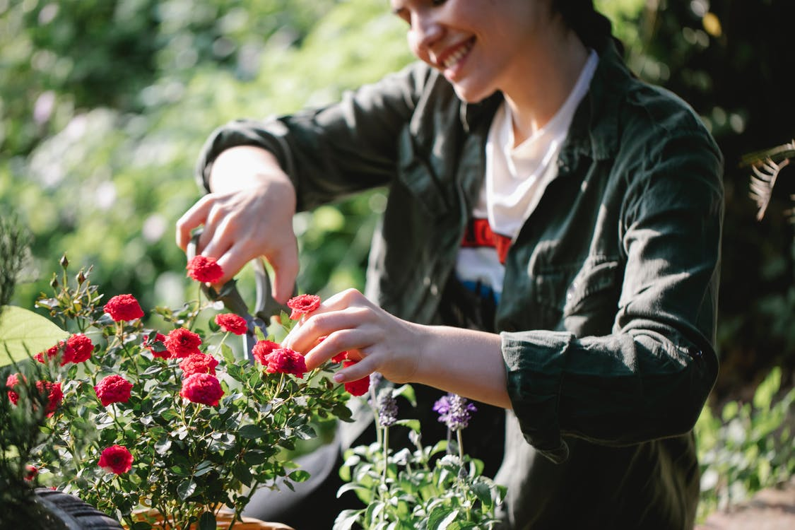 Smiling woman shaping blooming roses in garden