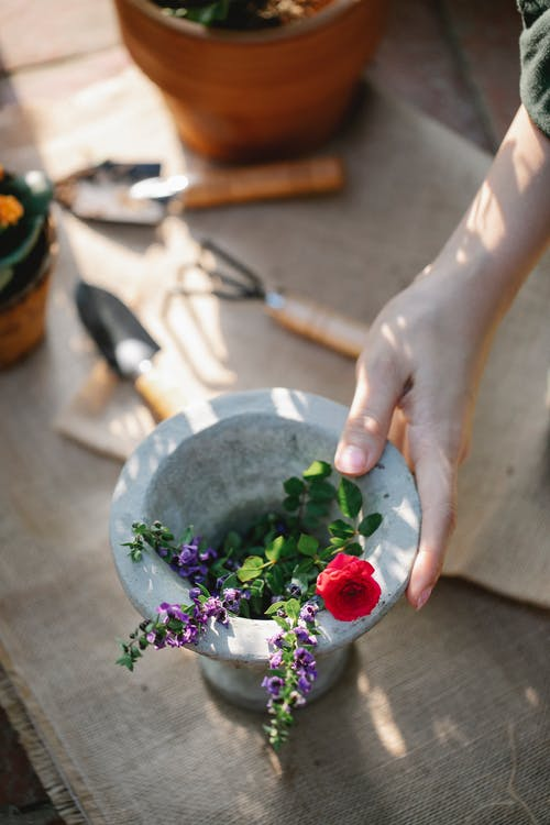 Woman taking flowers in vase for planting