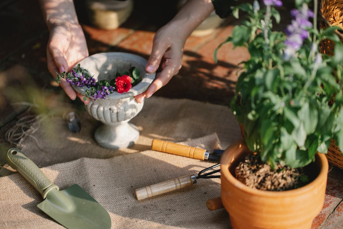 Gardener with ceramic vase of blooming branches