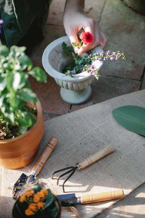 From above of crop anonymous grower showing bright blossoming flower in pot on walkway with gardening tools