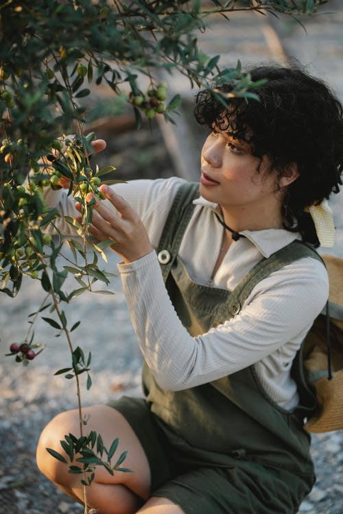 Young ethnic female farmer touching bundles of green olives on tree in countryside in daylight
