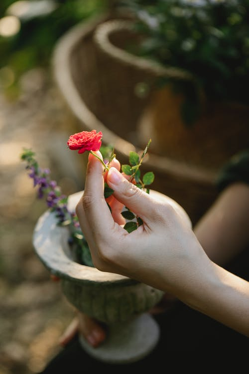 Crop anonymous grower touching small bright blooming flower in pot in garden on sunny day