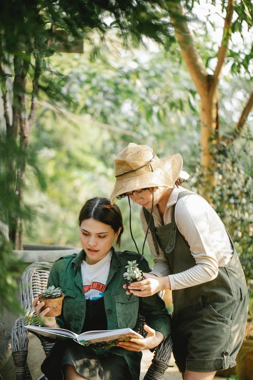 Young multiracial female horticulturists reading textbook while holding potted succulent plants against green trees in summer