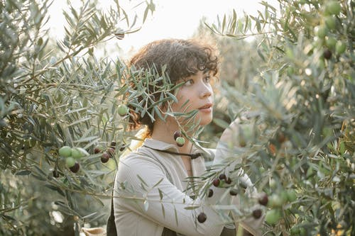 Ethnic female horticulturist looking at green olives on tree growing on farm in summer