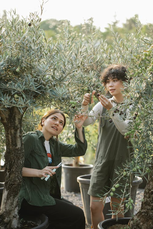 Multiracial horticulturists with gardening tool among olive trees